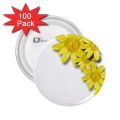 Flowers Spring Yellow Spring Onion 2 25  Buttons (100 Pack)