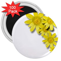 Flowers Spring Yellow Spring Onion 3  Magnets (100 Pack)