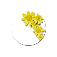 Flowers Spring Yellow Spring Onion Magnet 3  (Round)