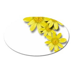 Flowers Spring Yellow Spring Onion Oval Magnet