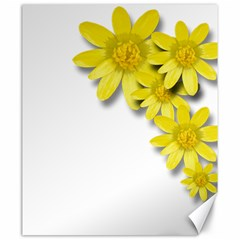 Flowers Spring Yellow Spring Onion Canvas 20  x 24