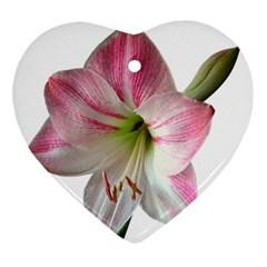 Flower Blossom Bloom Amaryllis Ornament (heart)