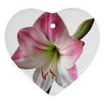 Flower Blossom Bloom Amaryllis Ornament (Heart) Front
