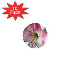 Flower Blossom Bloom Amaryllis 1  Mini Buttons (10 Pack)