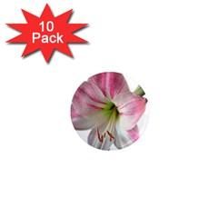 Flower Blossom Bloom Amaryllis 1  Mini Magnet (10 Pack)