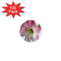 Flower Blossom Bloom Amaryllis 1  Mini Buttons (100 Pack)