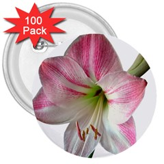 Flower Blossom Bloom Amaryllis 3  Buttons (100 Pack)