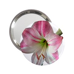 Flower Blossom Bloom Amaryllis 2 25  Handbag Mirrors