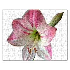 Flower Blossom Bloom Amaryllis Rectangular Jigsaw Puzzl