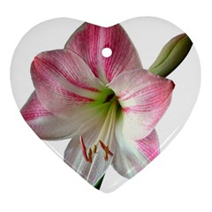 Flower Blossom Bloom Amaryllis Heart Ornament (Two Sides)