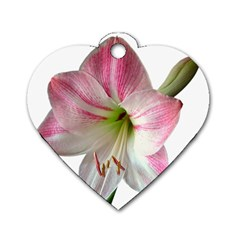 Flower Blossom Bloom Amaryllis Dog Tag Heart (Two Sides)