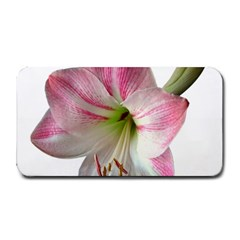 Flower Blossom Bloom Amaryllis Medium Bar Mats
