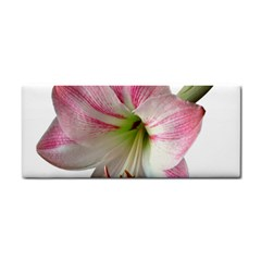 Flower Blossom Bloom Amaryllis Cosmetic Storage Cases