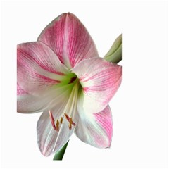 Flower Blossom Bloom Amaryllis Small Garden Flag (two Sides)