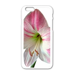 Flower Blossom Bloom Amaryllis Apple Iphone 6/6s White Enamel Case