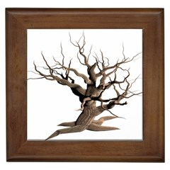 Tree Isolated Dead Plant Weathered Framed Tiles