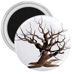 Tree Isolated Dead Plant Weathered 3  Magnets