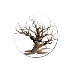 Tree Isolated Dead Plant Weathered Magnet 3  (round)