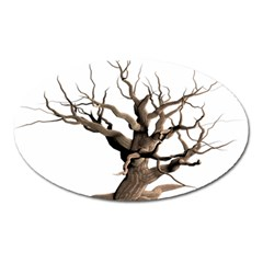 Tree Isolated Dead Plant Weathered Oval Magnet