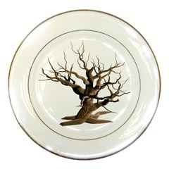 Tree Isolated Dead Plant Weathered Porcelain Plates