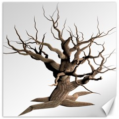 Tree Isolated Dead Plant Weathered Canvas 20  X 20