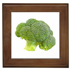 Broccoli Bunch Floret Fresh Food Framed Tiles