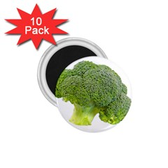 Broccoli Bunch Floret Fresh Food 1 75  Magnets (10 Pack)