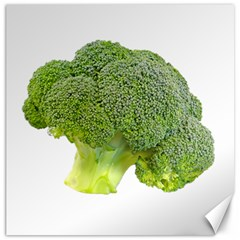 Broccoli Bunch Floret Fresh Food Canvas 20  X 20