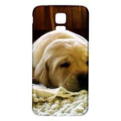 2 Puppy Yl Samsung Galaxy S5 Back Case (White)