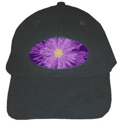 Purple Flower Floral Purple Flowers Black Cap