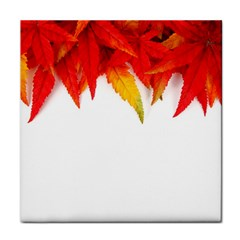 Abstract Autumn Background Bright Tile Coasters