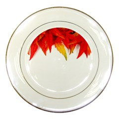 Abstract Autumn Background Bright Porcelain Plates