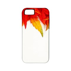 Abstract Autumn Background Bright Apple Iphone 5 Classic Hardshell Case (pc+silicone)