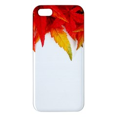 Abstract Autumn Background Bright Apple Iphone 5 Premium Hardshell Case