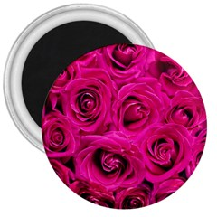 Pink Roses Roses Background 3  Magnets