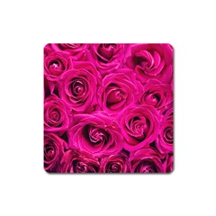 Pink Roses Roses Background Square Magnet