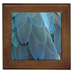 Feather Plumage Blue Parrot Framed Tiles