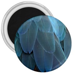 Feather Plumage Blue Parrot 3  Magnets