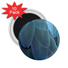 Feather Plumage Blue Parrot 2 25  Magnets (10 Pack)