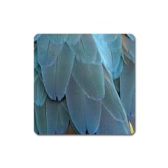 Feather Plumage Blue Parrot Square Magnet