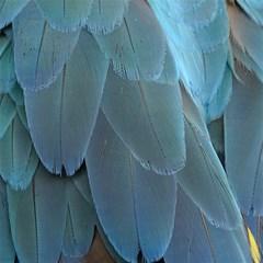 Feather Plumage Blue Parrot Magic Photo Cubes