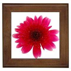 Flower Isolated Transparent Blossom Framed Tiles