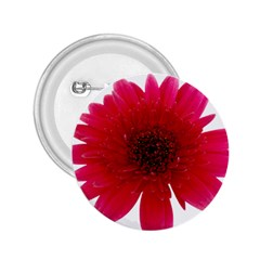 Flower Isolated Transparent Blossom 2.25  Buttons