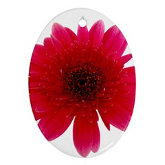 Flower Isolated Transparent Blossom Ornament (oval)