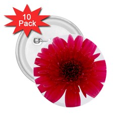 Flower Isolated Transparent Blossom 2.25  Buttons (10 pack)