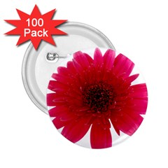 Flower Isolated Transparent Blossom 2.25  Buttons (100 pack)