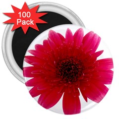 Flower Isolated Transparent Blossom 3  Magnets (100 Pack)