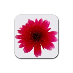 Flower Isolated Transparent Blossom Rubber Coaster (Square)