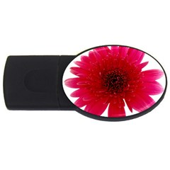 Flower Isolated Transparent Blossom USB Flash Drive Oval (1 GB)