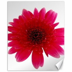 Flower Isolated Transparent Blossom Canvas 16  X 20